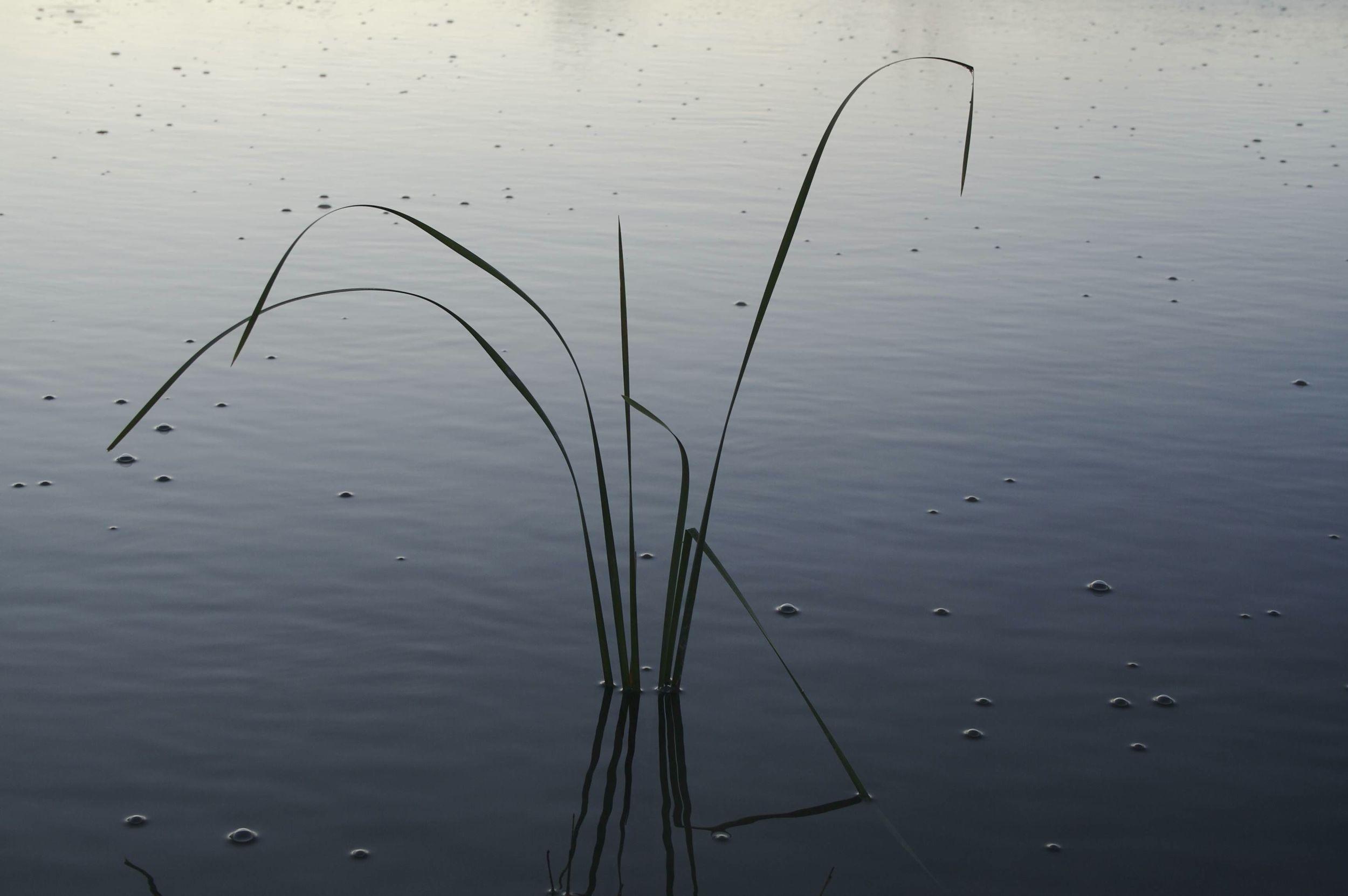 Waterscape1.jpg