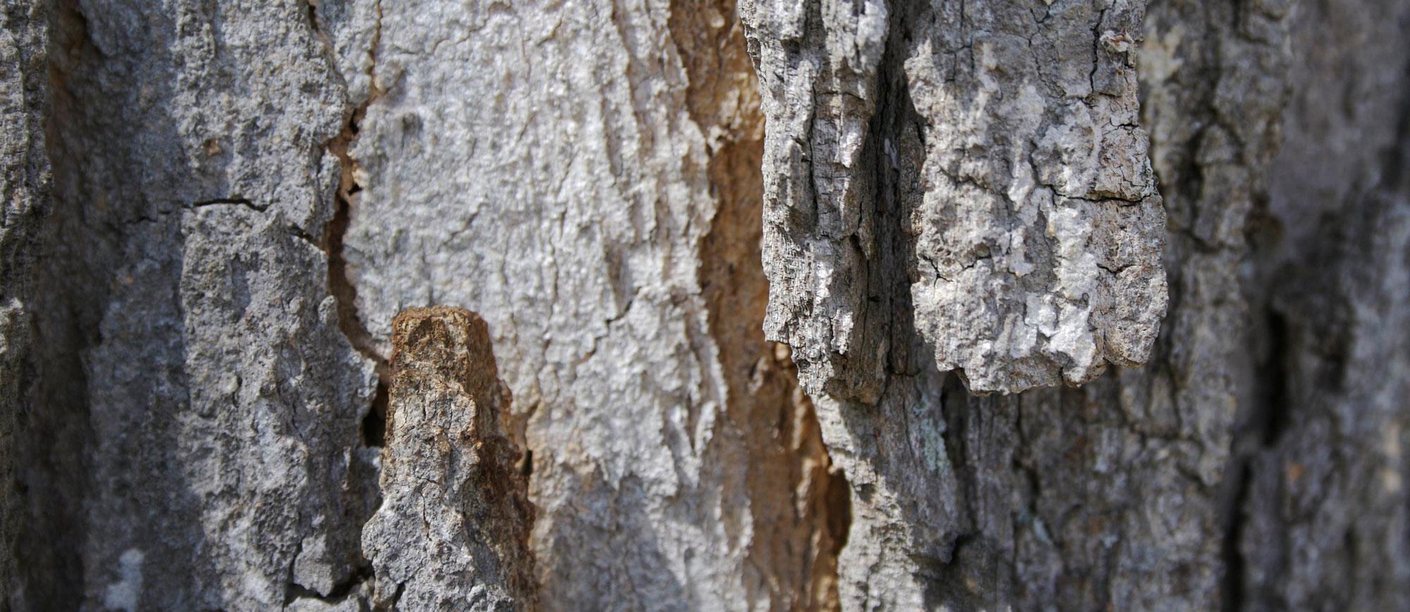 TreebarkPanorama1.jpg