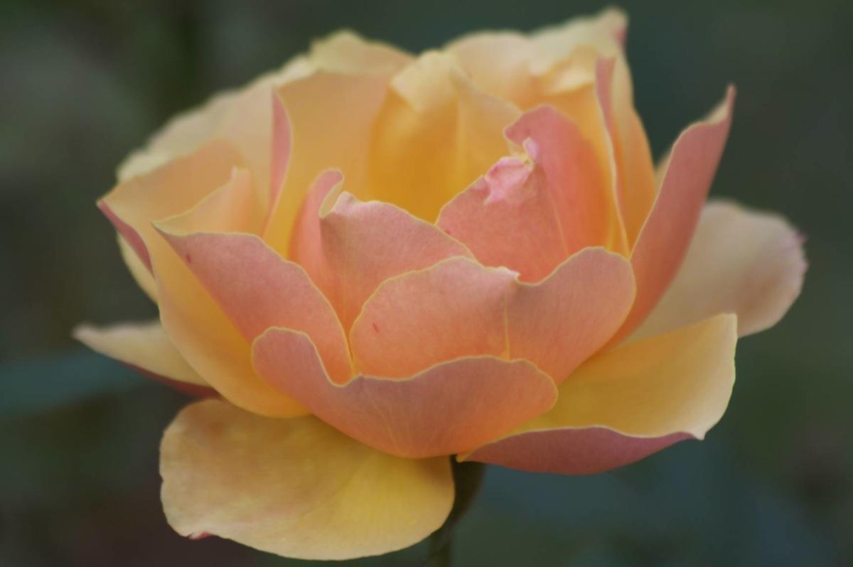 Flowers23.jpg