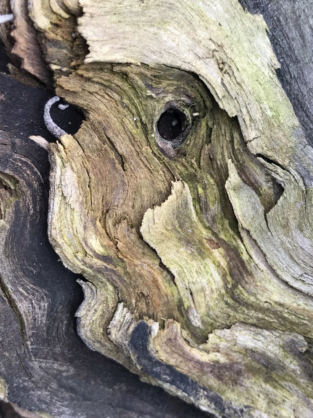 Face in Driftwood