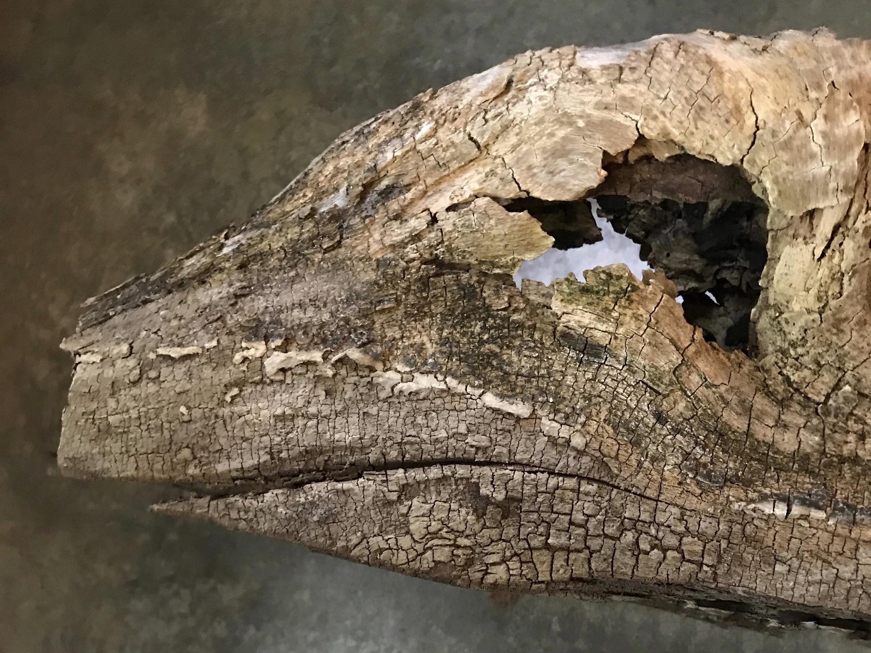 Dinosaur Driftwood