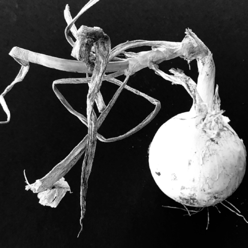 Onion from the garden (not displayed at SH&W)