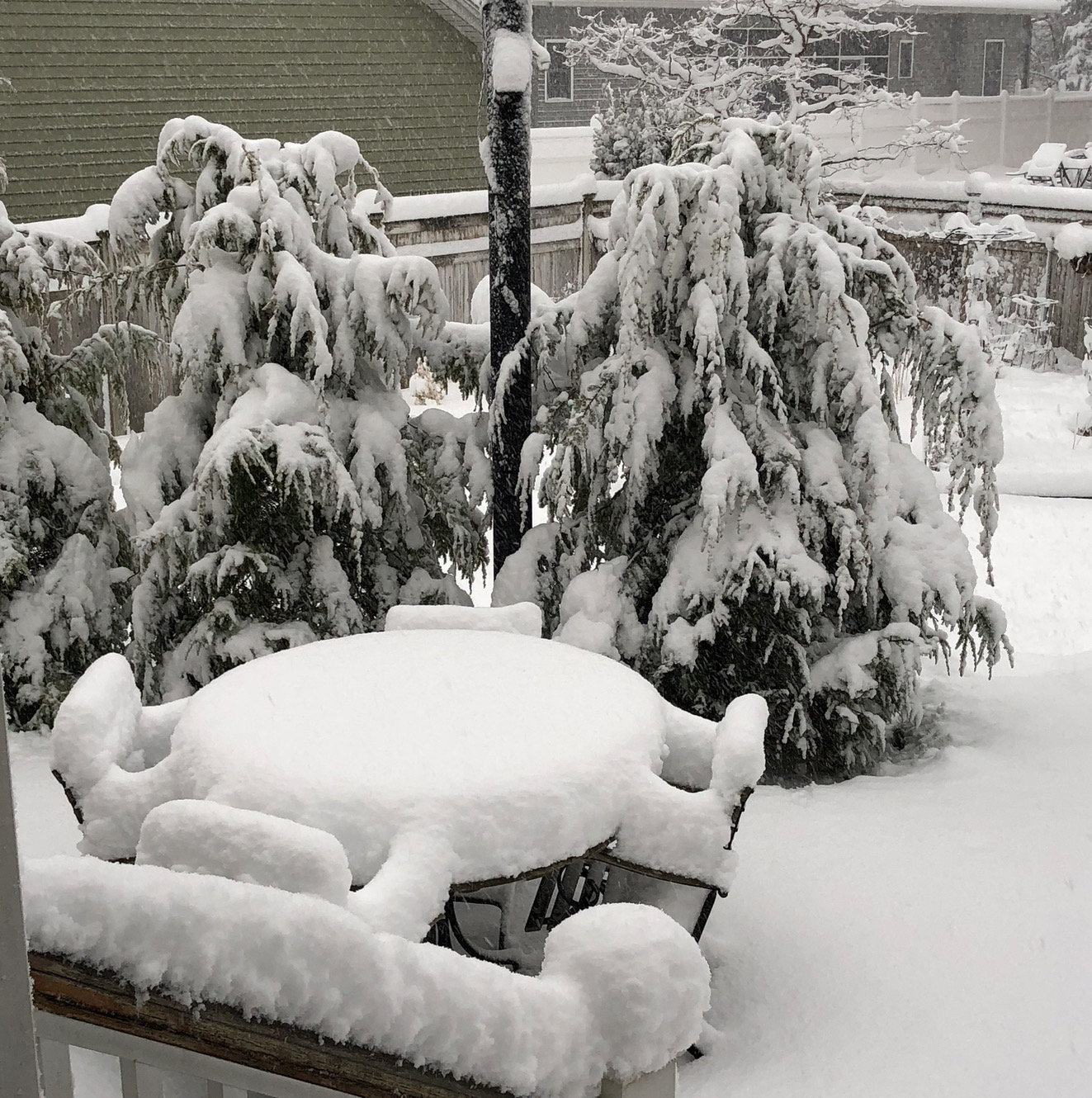 Back yard after the recent snow storm.