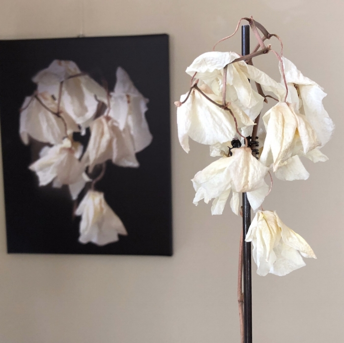 Here is the actual orchid in front of the photo of the orchid (not displayed at SH&W)