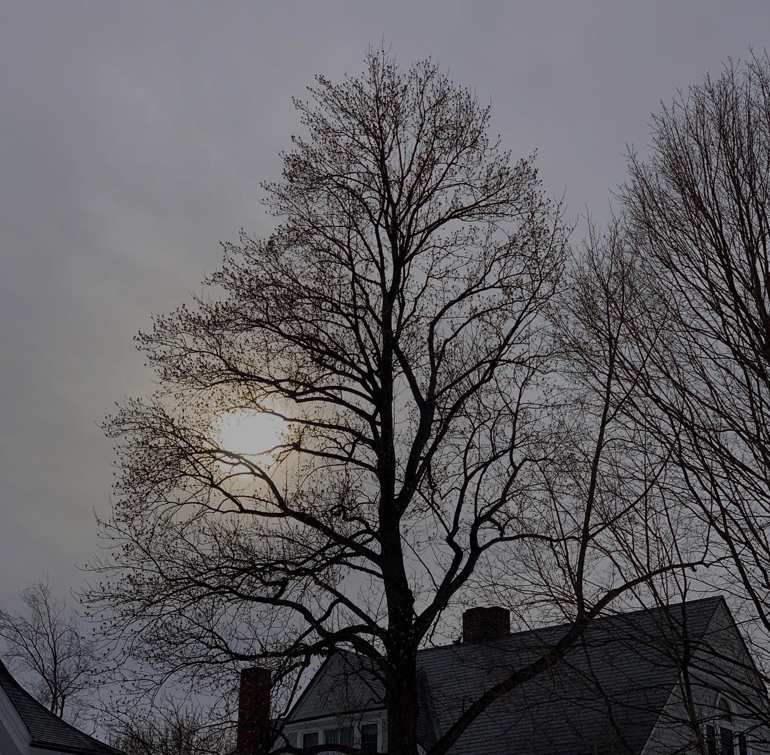 Screen Shot 2019-03-11 at 10.34.07 AM.jpg