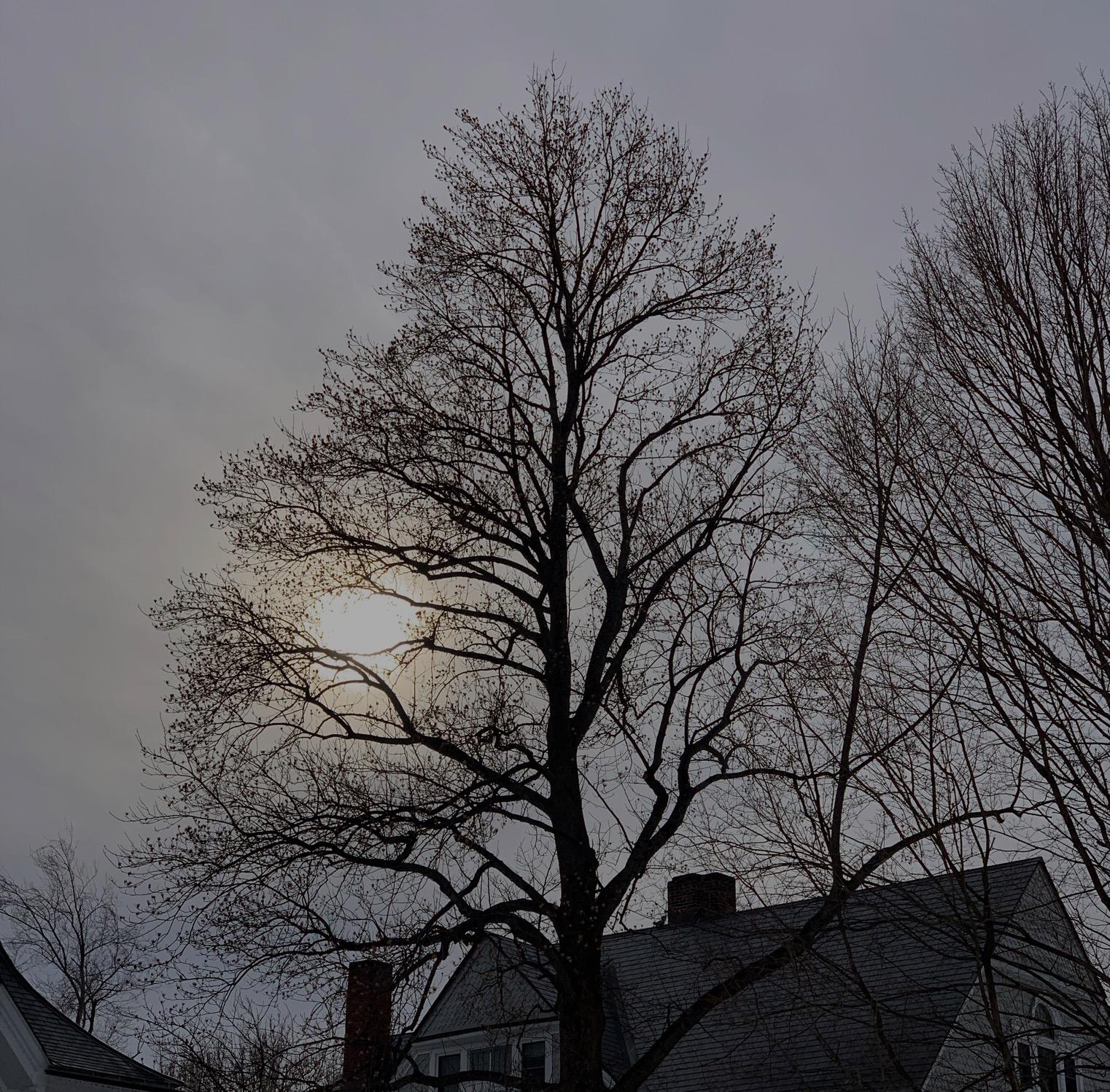 Screen Shot 2019-03-12 at 10.19.37 AM.jpg