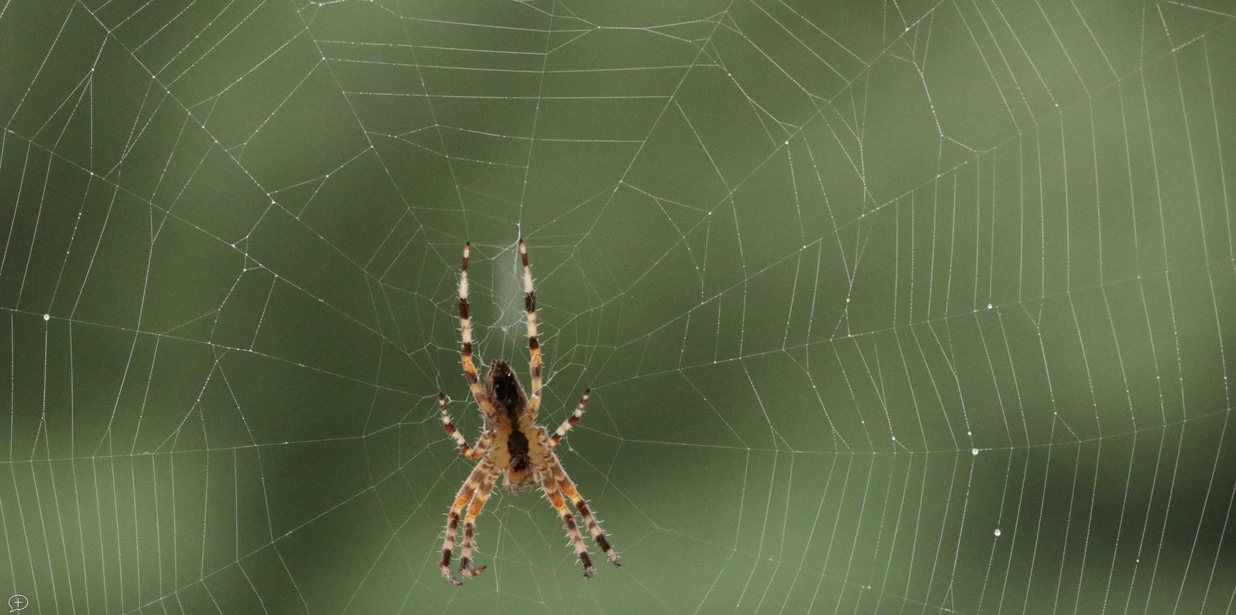 Spider's Web. ©2018 Sean Walmsley