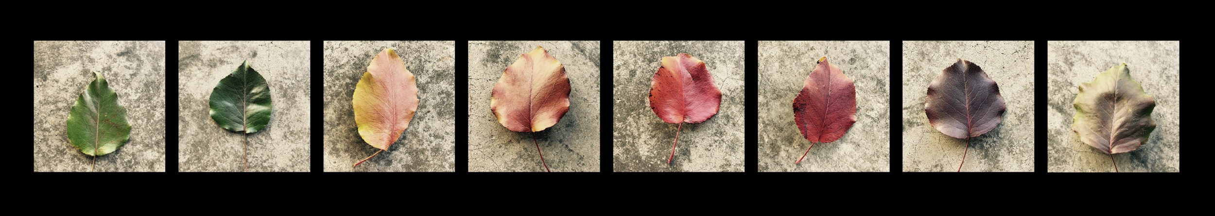 Leaves in the Process of Dying  . ©2019 Sean Walmsley