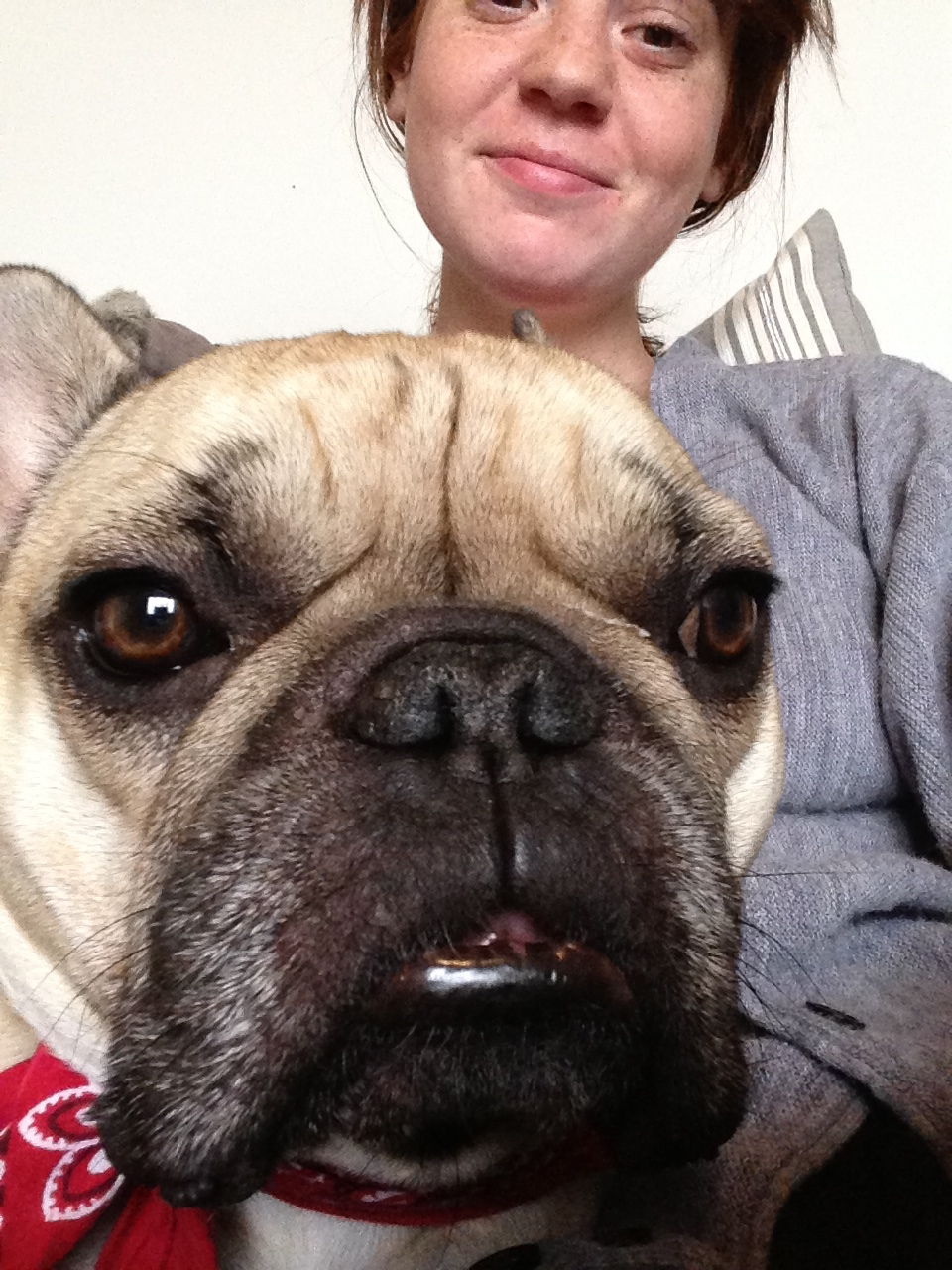 """June with charge Steak, a French Bulldog. June has walked over 7 """"Frenchies,"""" including one pack of 3 who """"had to stop and sniff EVERYTHING."""" Credit: June B."""