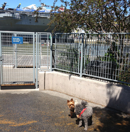No big deal, just my dog, Avon Barksdale, making a new Yorkie friend next to a giant, decommissioned aircraft carrier.