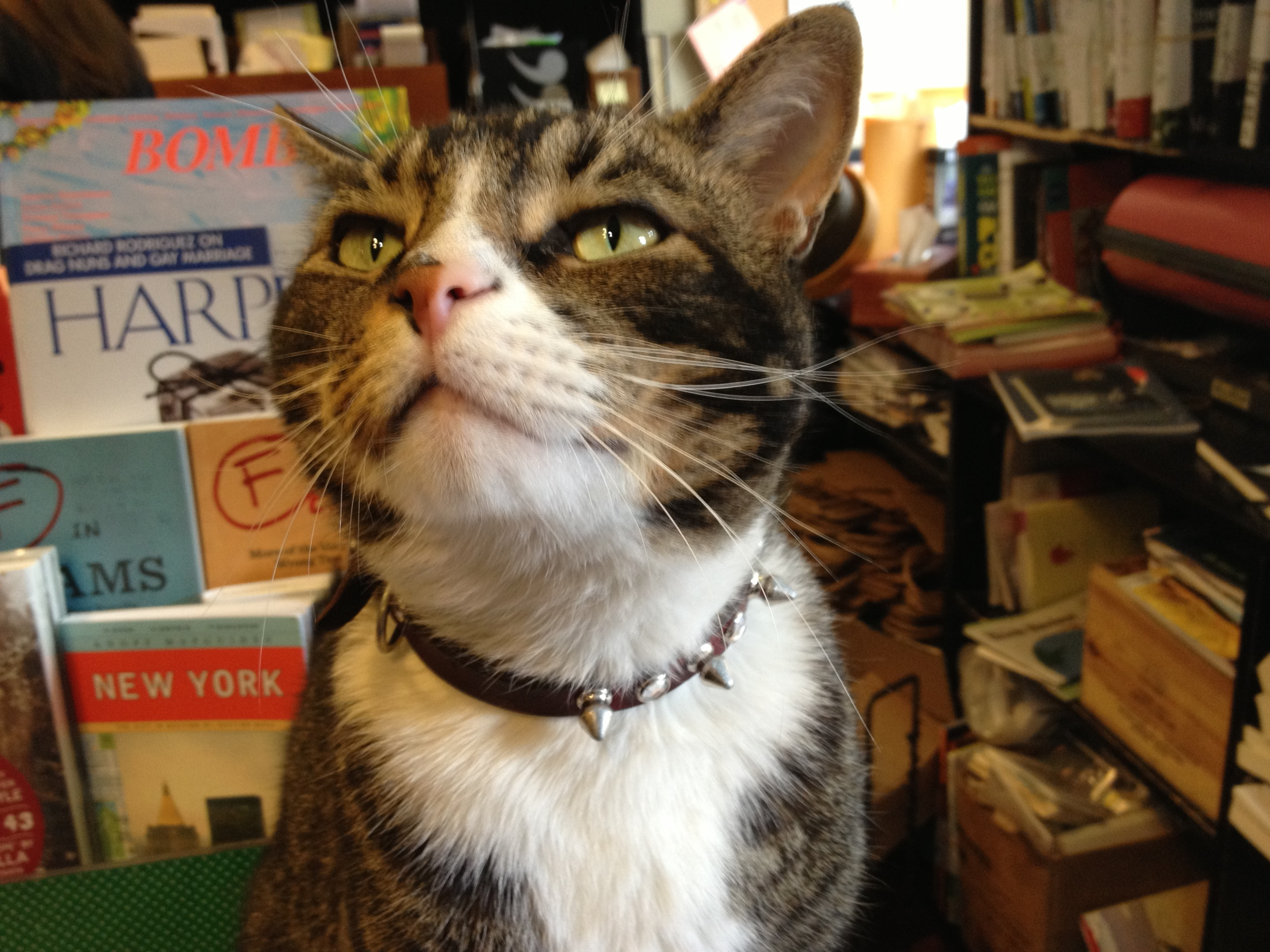 Tiny, co-owner of Community Bookstore (Credit: Photo by author)