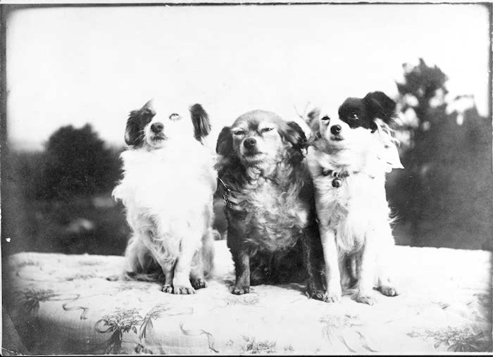 Wharton's dogs Mitou, Miza and Nicette (via      The Moun  t   )
