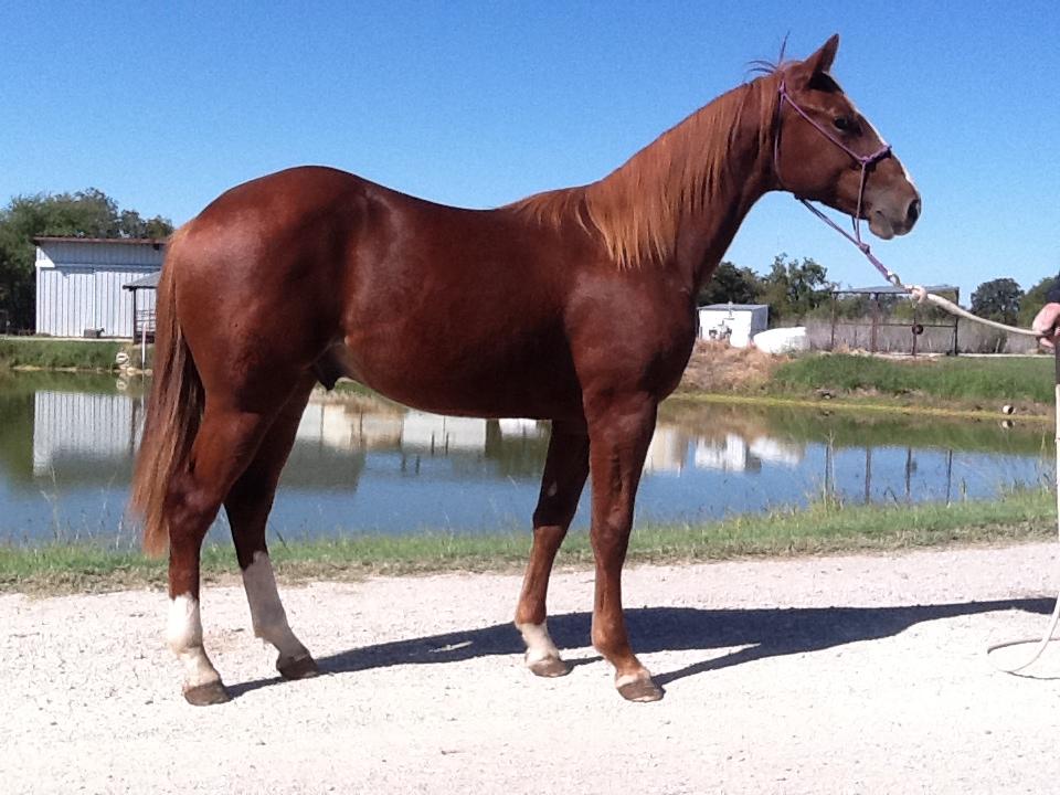 Horses For Sale — Sid Miller Horses