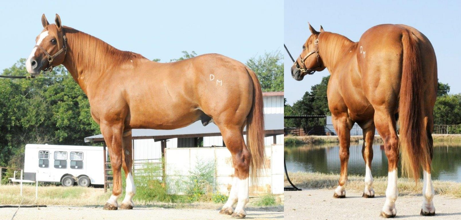 Big Classic Wonder: Open and Amateur Performance ROM with $5,300+ AQHA Money Earned and 83+ AQHA Points Earned