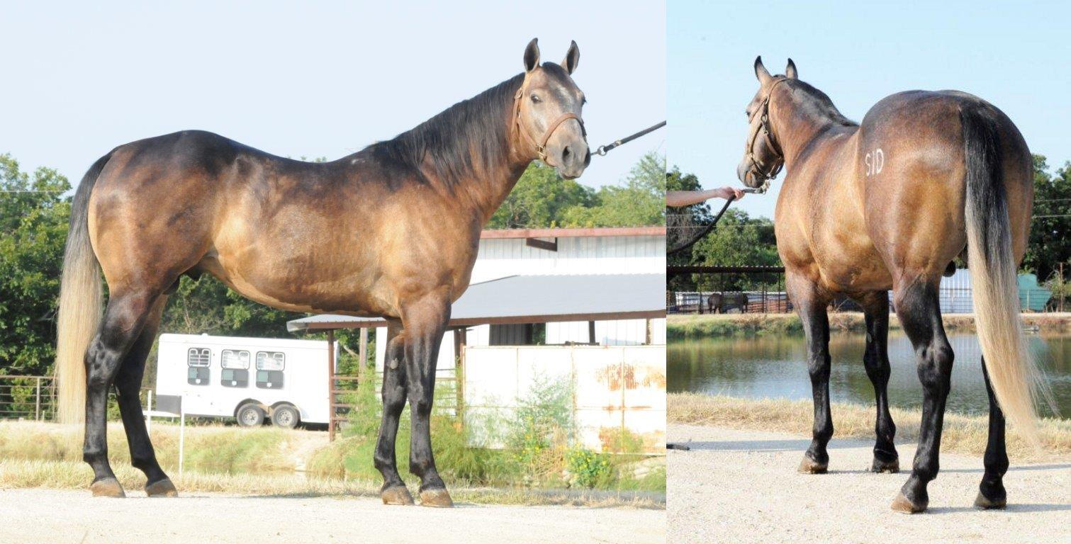 calf-roping-horse-big-playgun.jpg