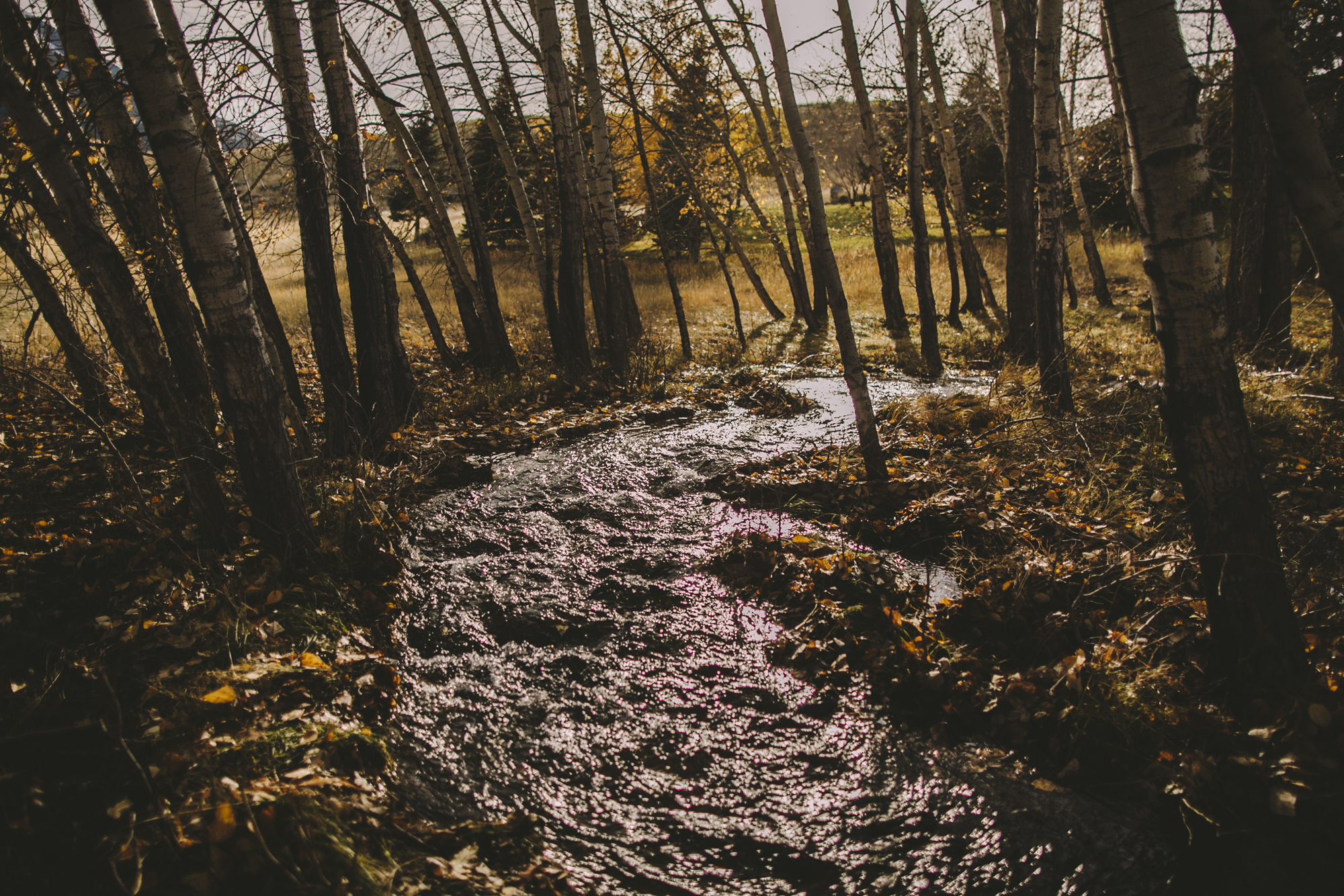 yellowstone national park wedding pray montana chico hot springs