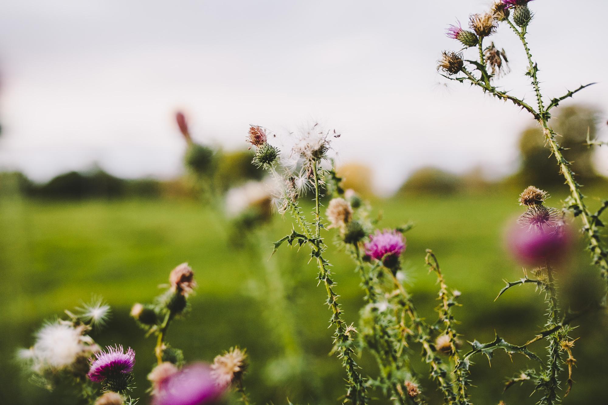 Brandon_Werth_Photography_EOY16_183.jpg
