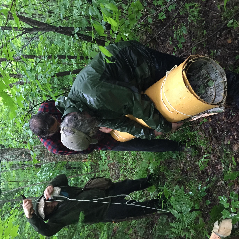 gathering birch bark in the pouring rain
