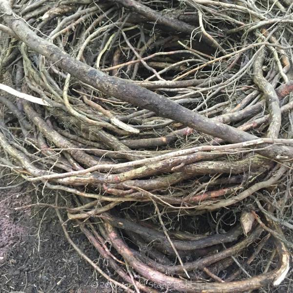 piles of root