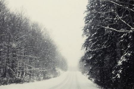 The Drive to the Cabin / Felicia Sullivan