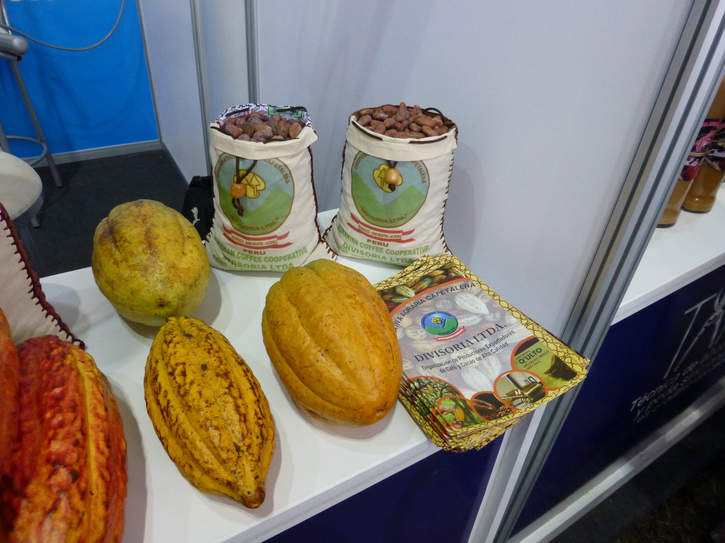 Cacao comes in many varieties