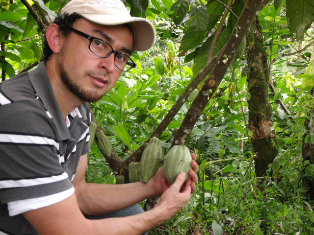 Miguel inspects the cacao