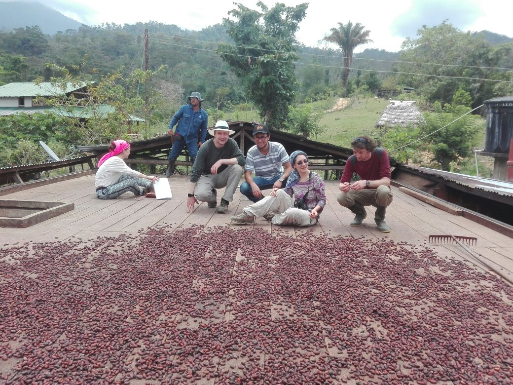 Rooftop drying of the beans