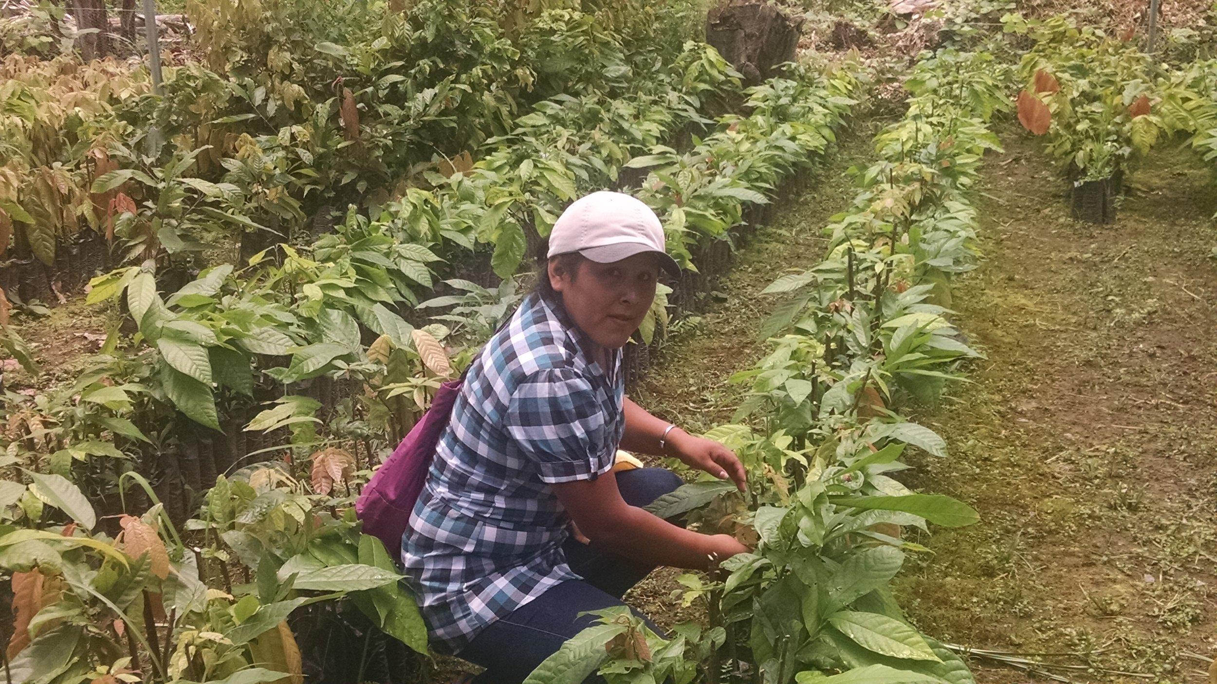 Meri inspecting seedlings