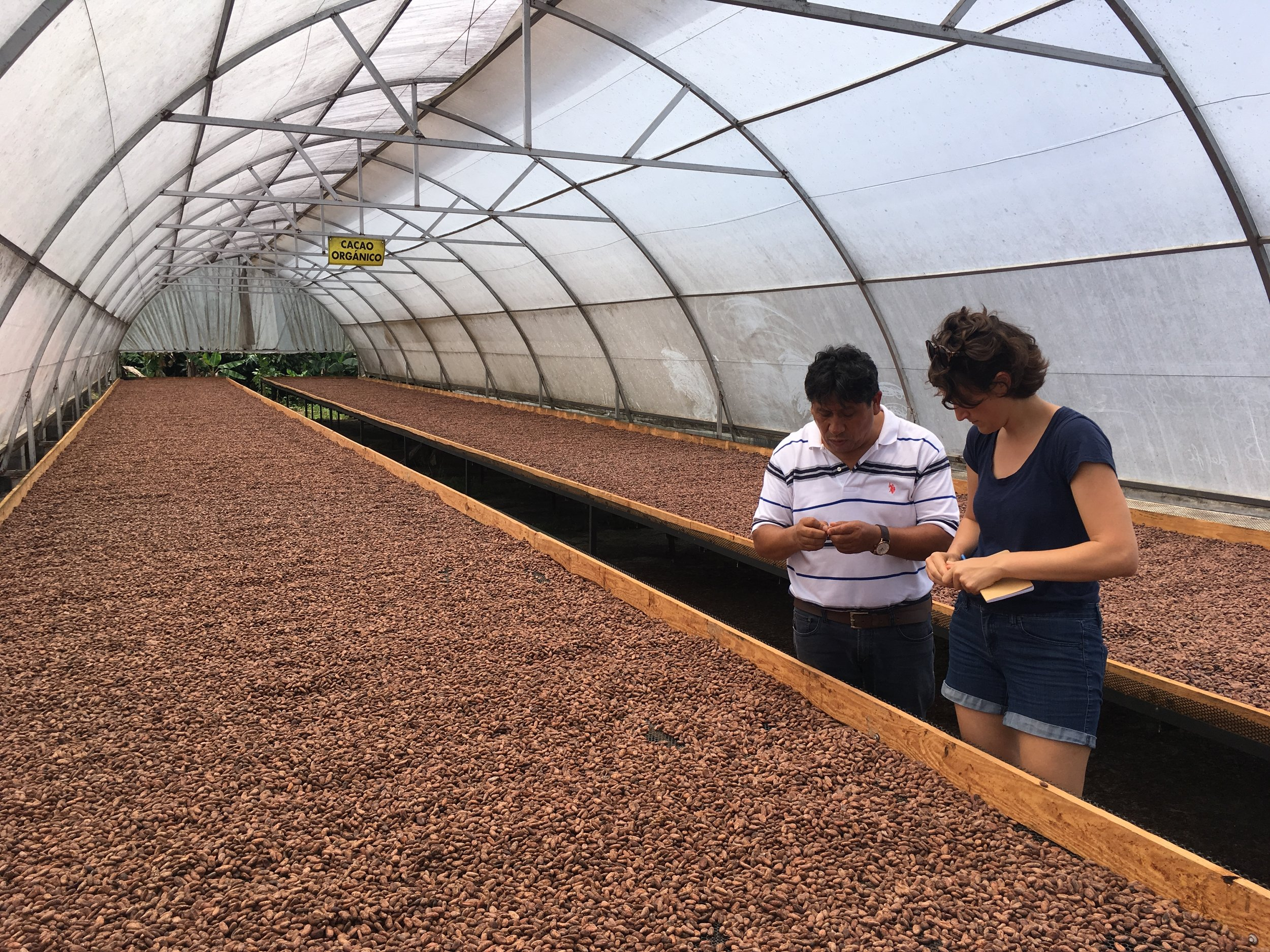 Drying the cacao