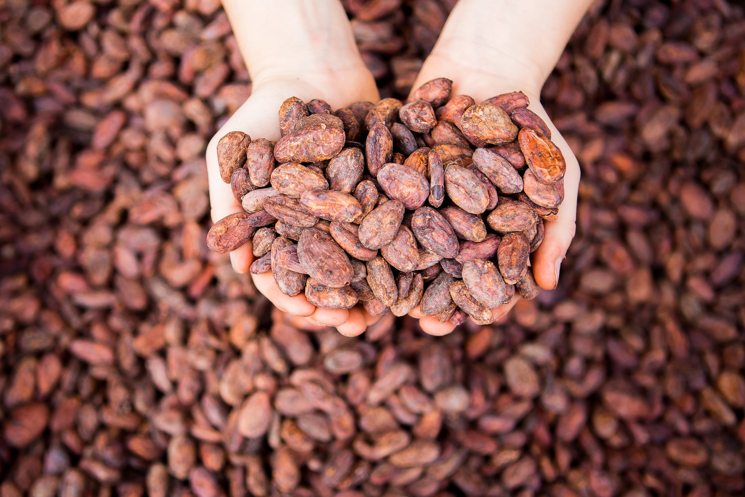 Wholesale Cacao NIBS for BEER BREWERS & BREWERIES - Tabal Chocolate works with brewers throughout the Unites States to provide single origin custom roasted cacao nibs from Peru, Colombia, Costa Rica, Nicaragua, Dominican Republic and others. Each origin will provide a unique flavor profile that brings complexity and interest to your beer or beverage.Please email us at info@TabalChocolate.com for more information.