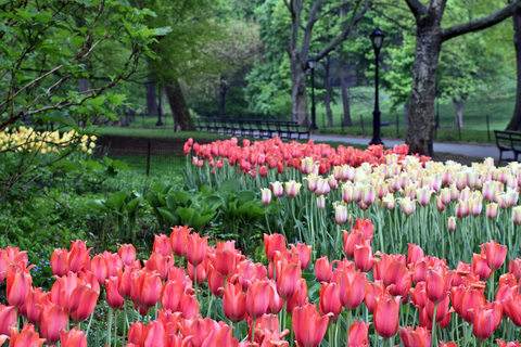 Central Park in spring with flowers.JPG