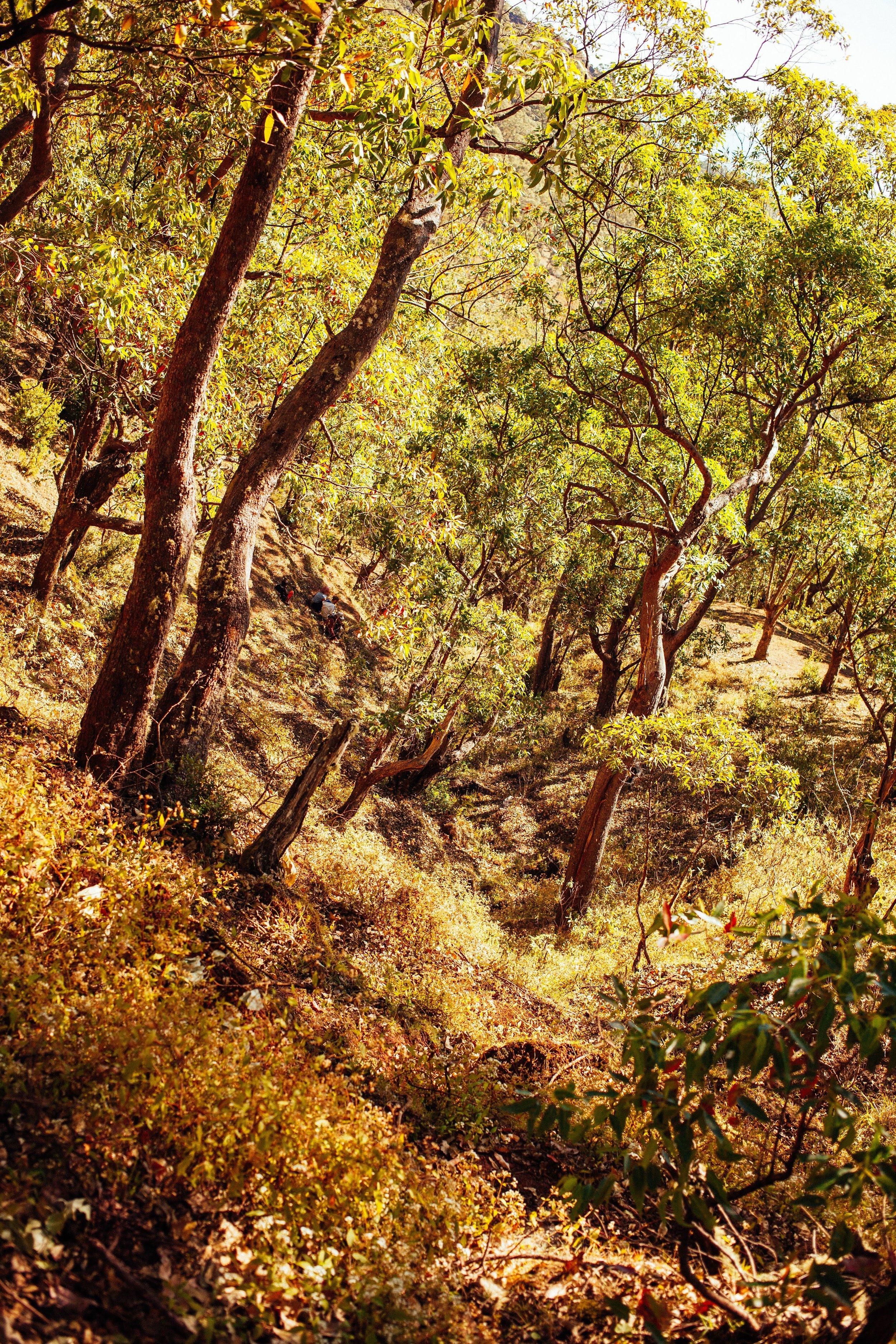 Timor_17-09-11_083.jpg