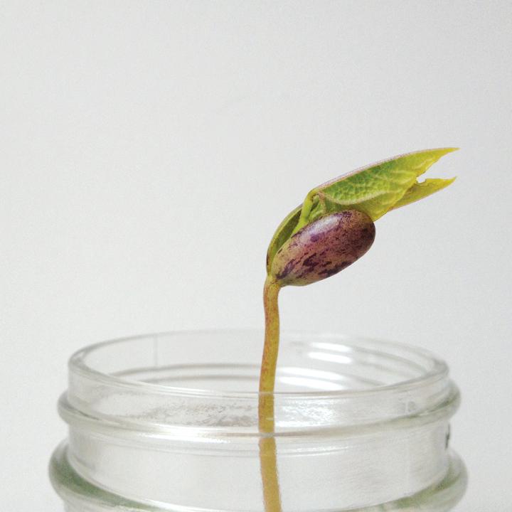 bean_grow.jpg