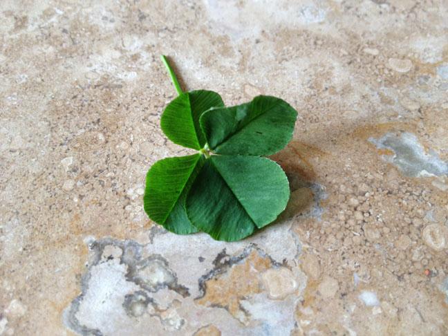 4-leafclover.jpg