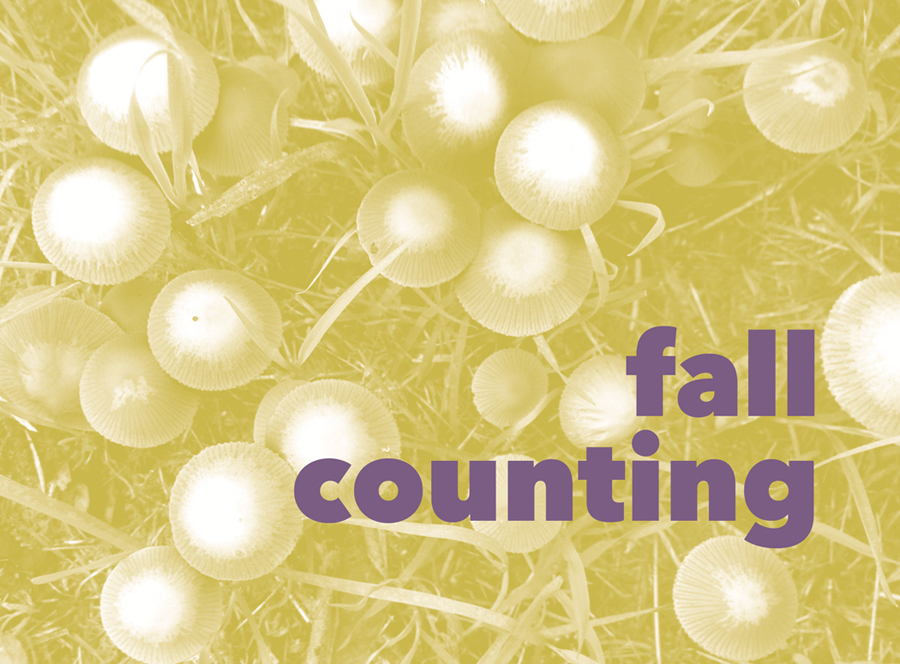 fall_counting3.jpg
