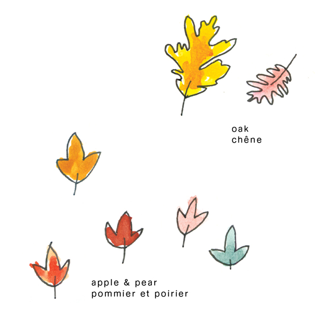 colouring sheet fall leaves