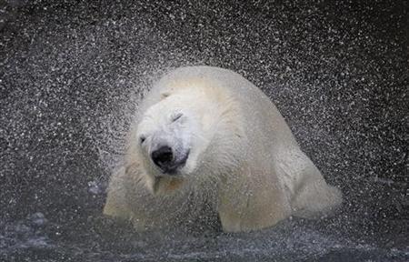 Polar Bear Mystery.jpg