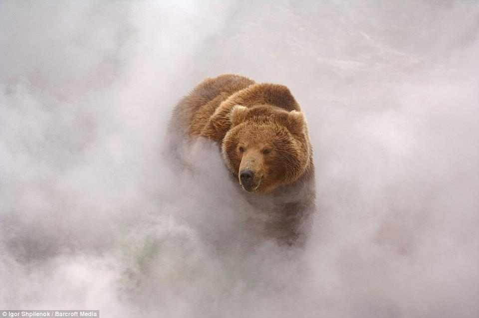 Bear in Mist.jpg