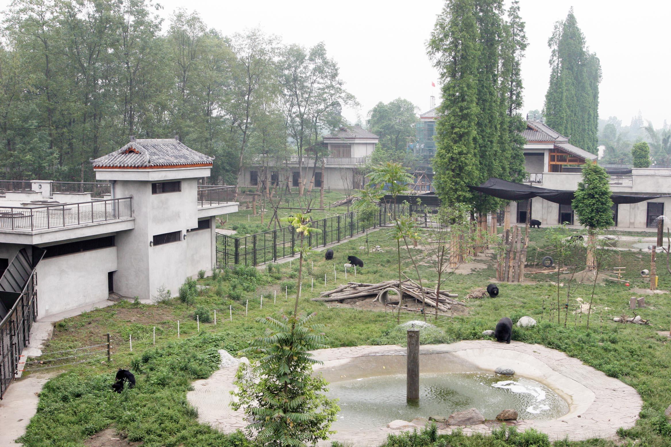 Animals Asia Moon Bear Sanctuary, Animals Asia