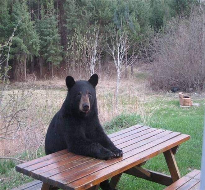 I KNOW bears are not companion animals, but if there ever was a photo that illustrates what I am saying...