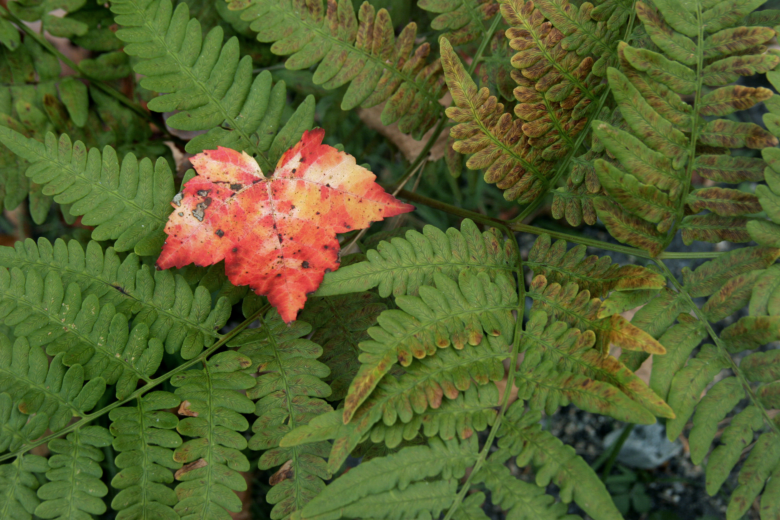 Leaf and Fern