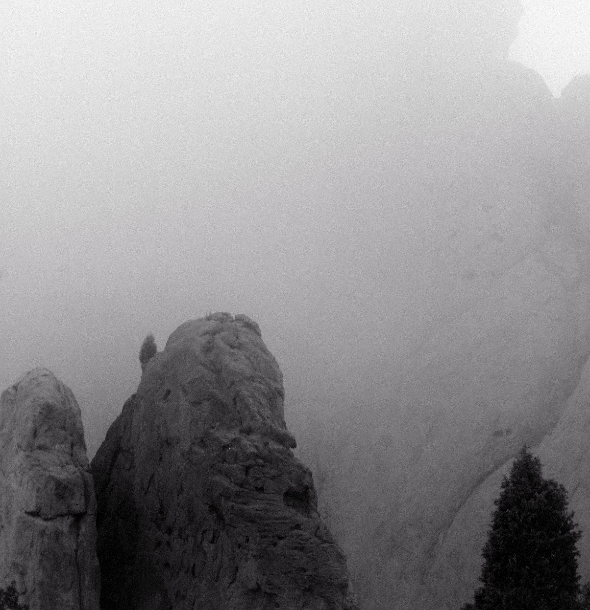 Kissing Camels in Fog #2