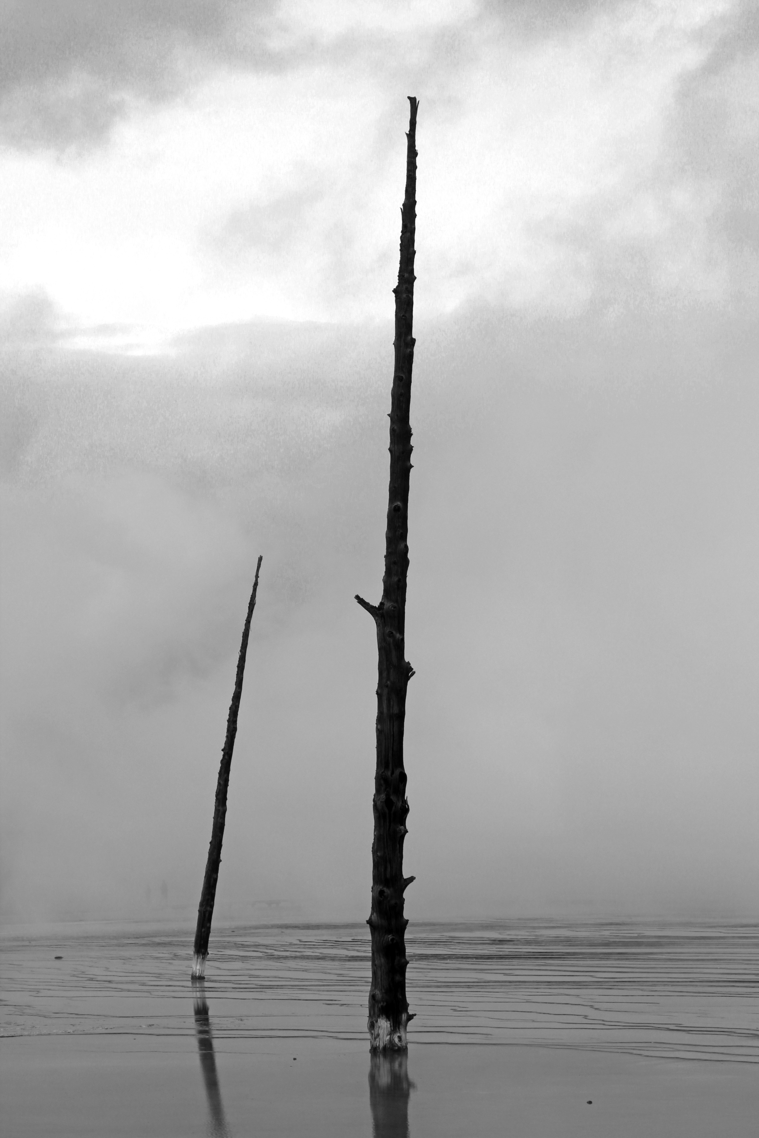 Dead Trees, Yellowstone