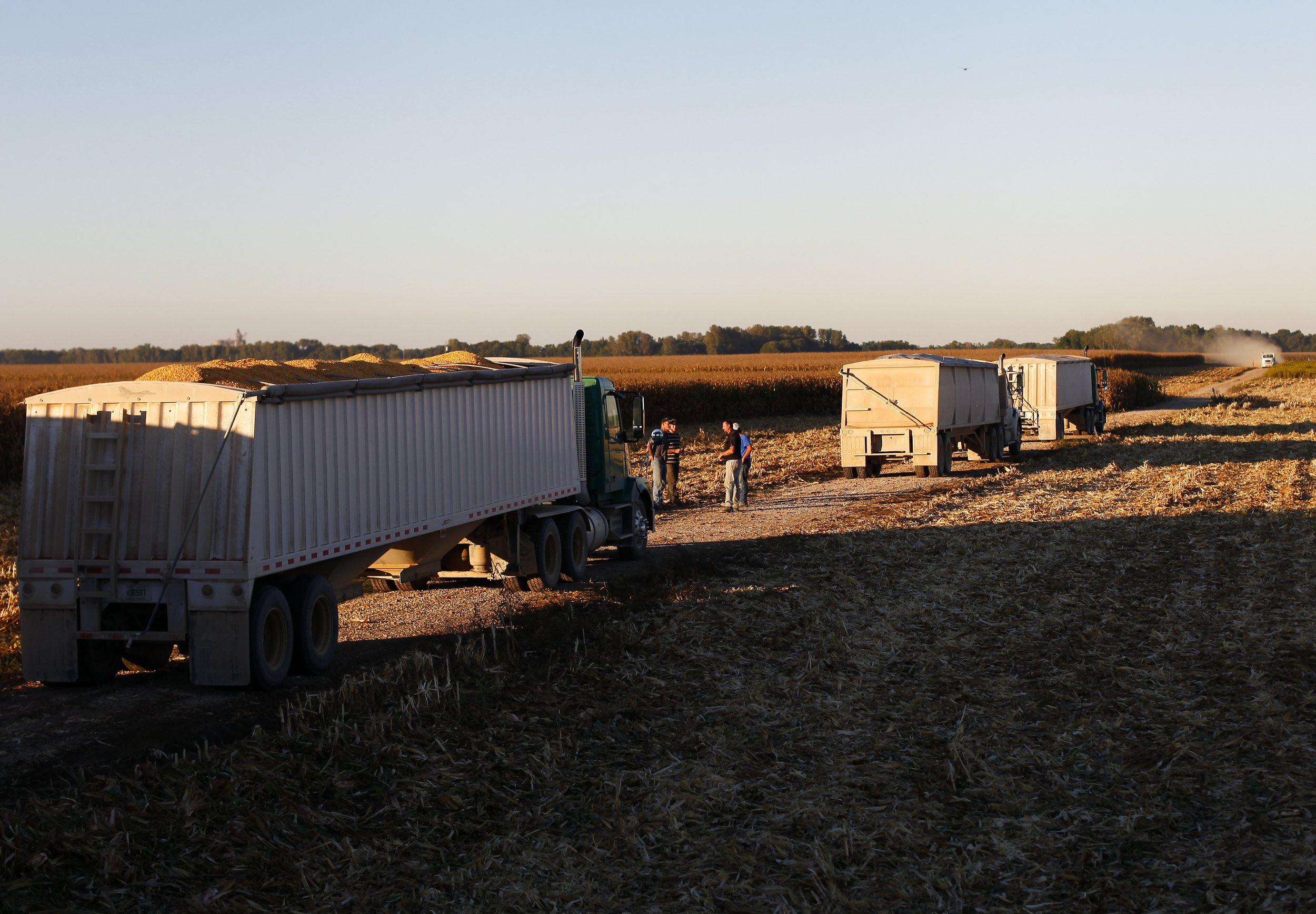 Workers wait for their trucks to be filled with the last load of corn for the day.