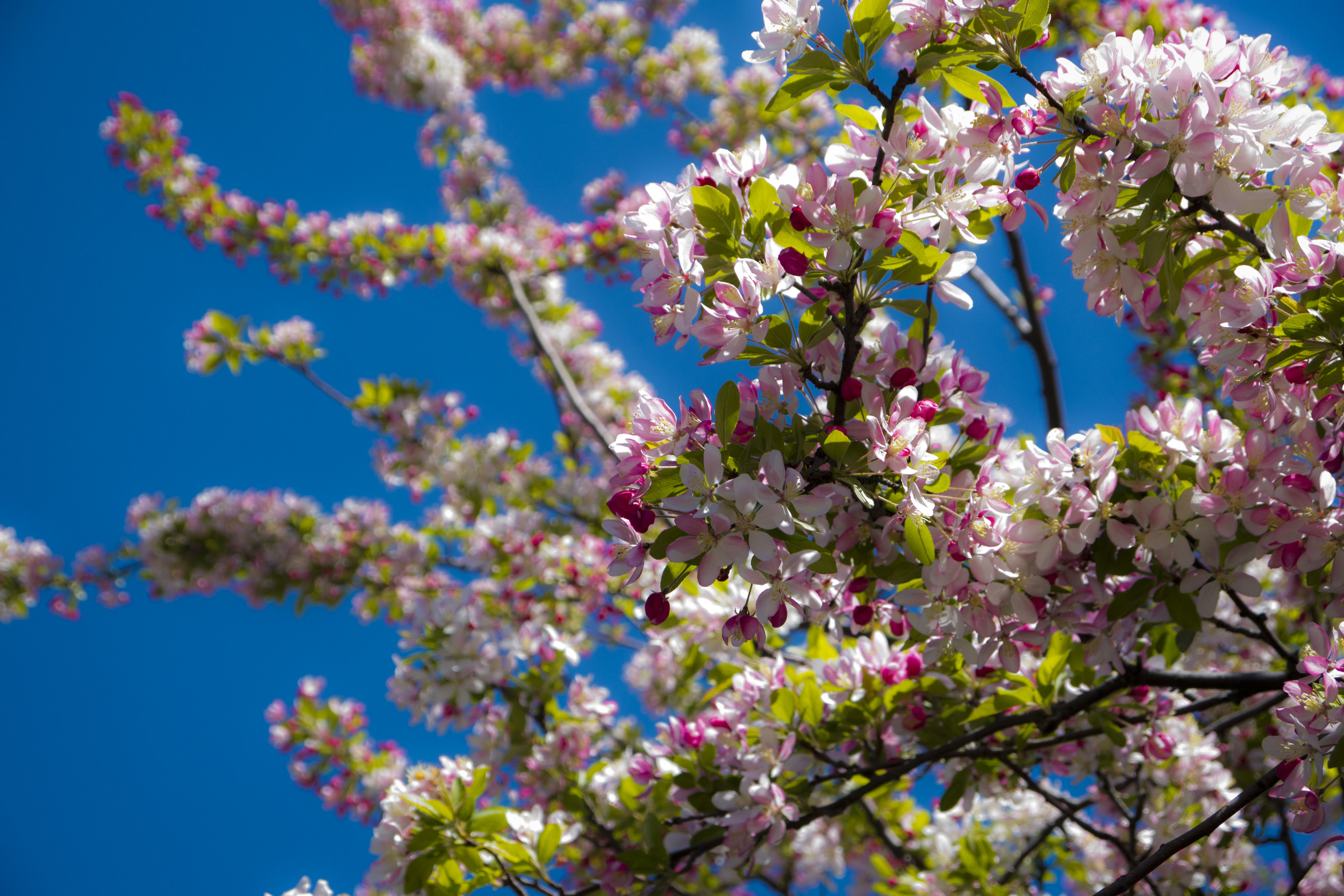 FlowerTree040712.jpg