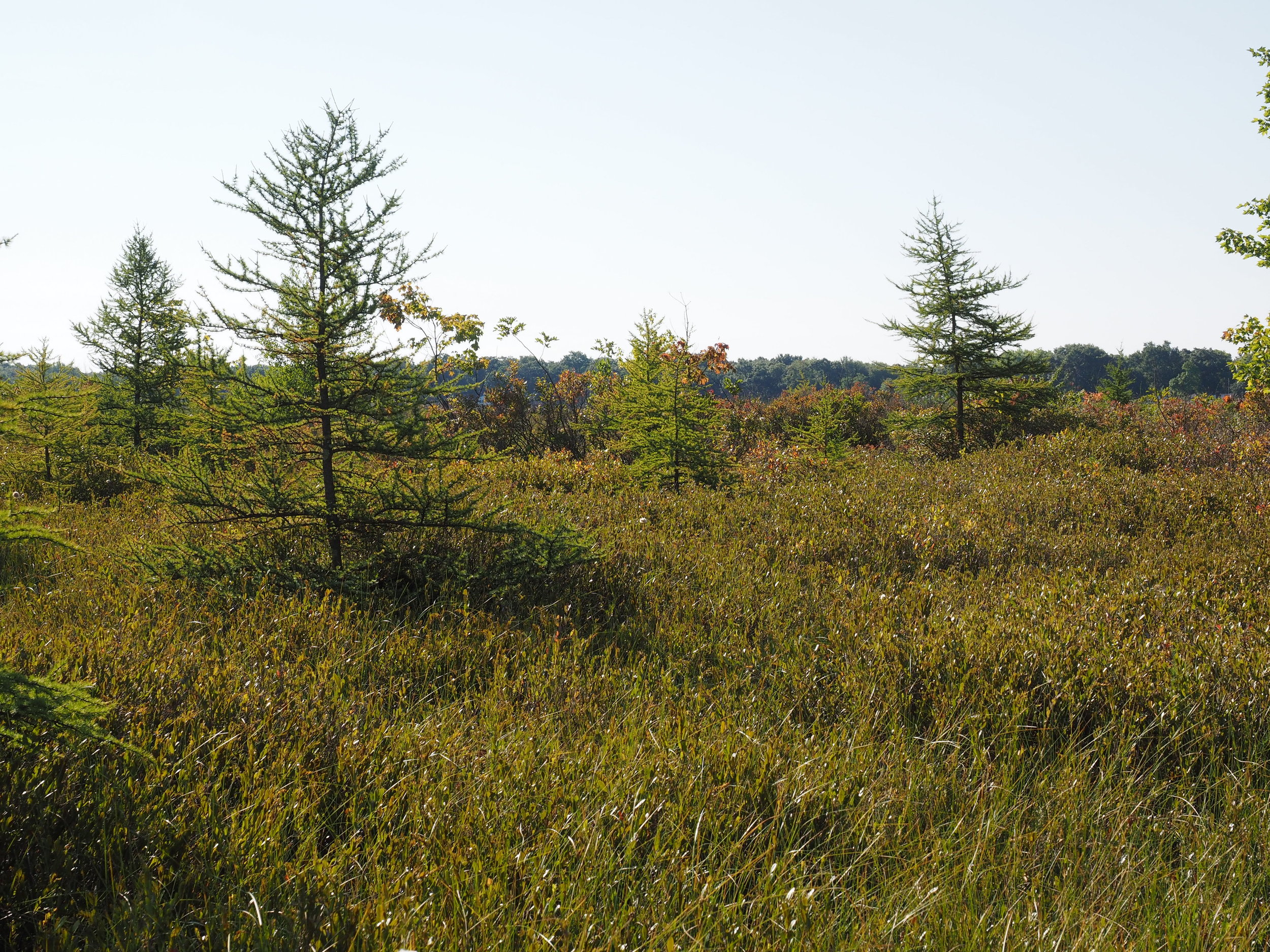 West Lake Bog