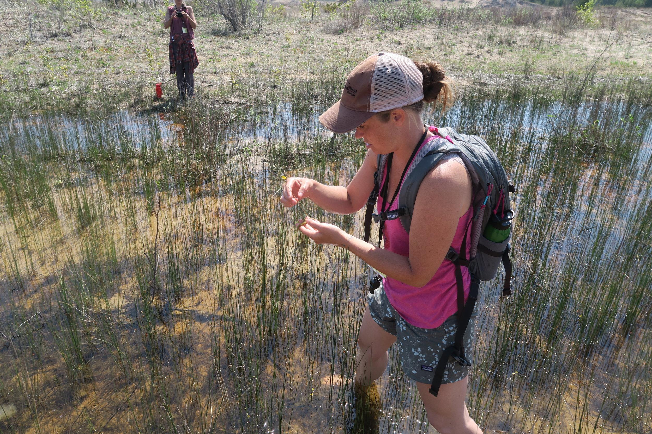 Fishermans Island Liana May (5) Liana May Utricularia cornuta.JPG