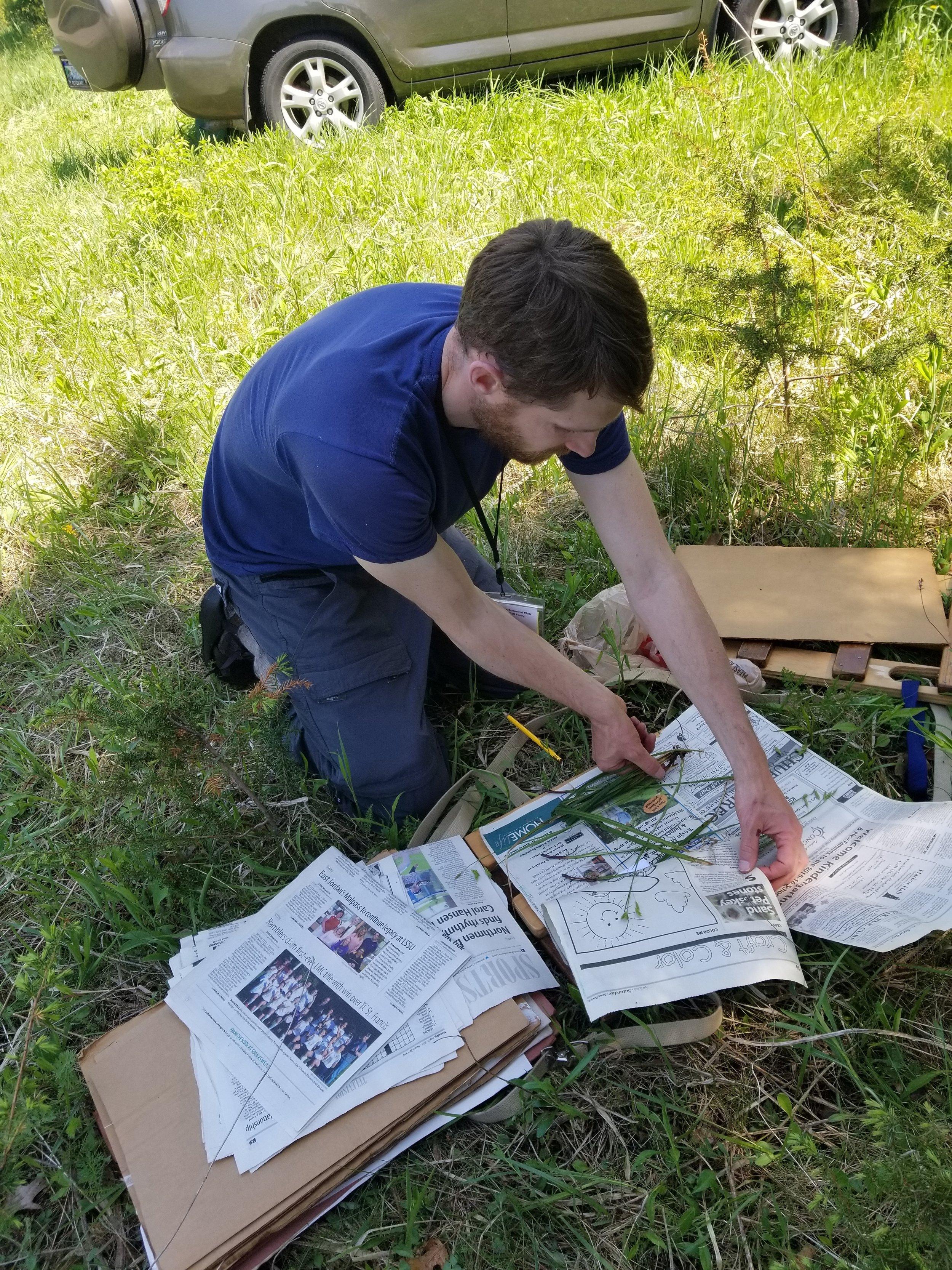 Marchio Nature Preserve (123) Derek Shiels presses plant.jpg