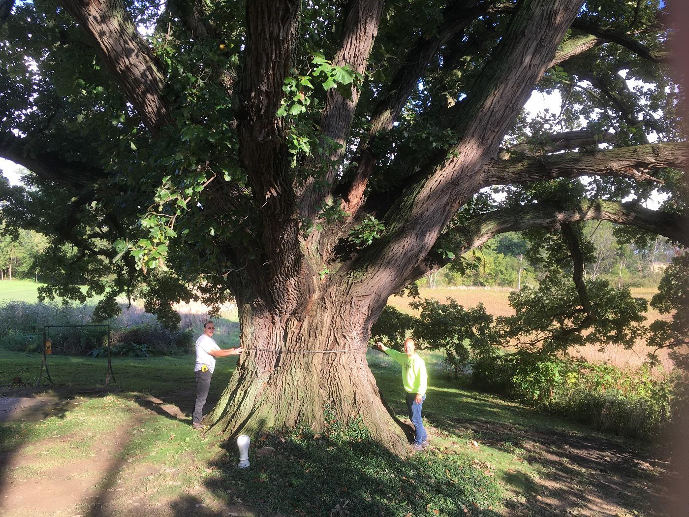 1222-Quercus-macrocarpa-1r.png