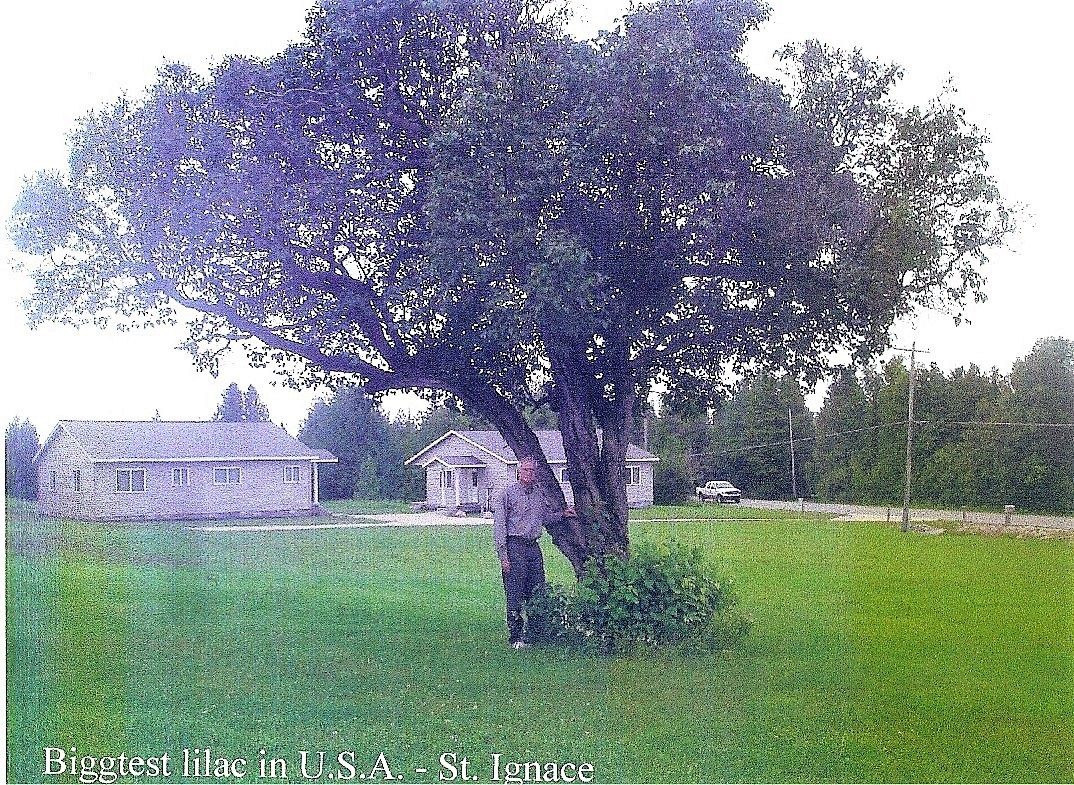 1393-Syringa-vulgaris-state-and-natl-champ-St-Ignace-r.png